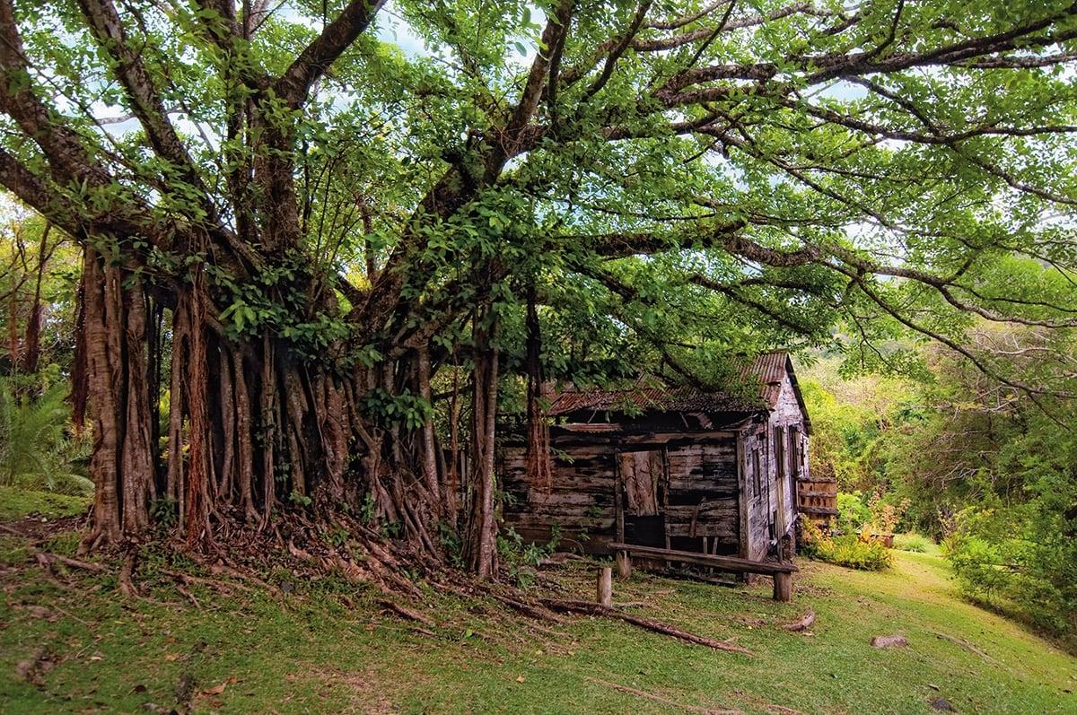 Mamiku Gardens, St Lucia