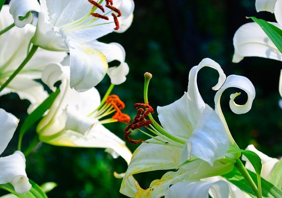 dom-kwiatki_(103_of_122)